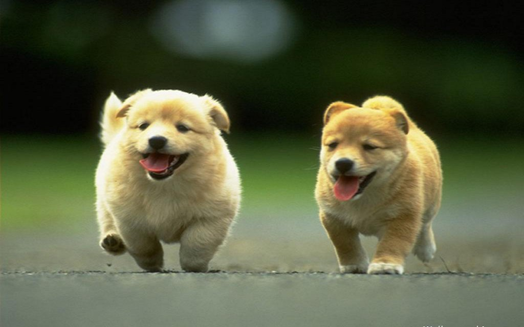 sweet-cute-dogs